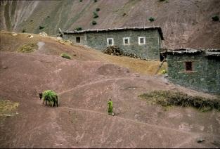 Vernacular village architecture.